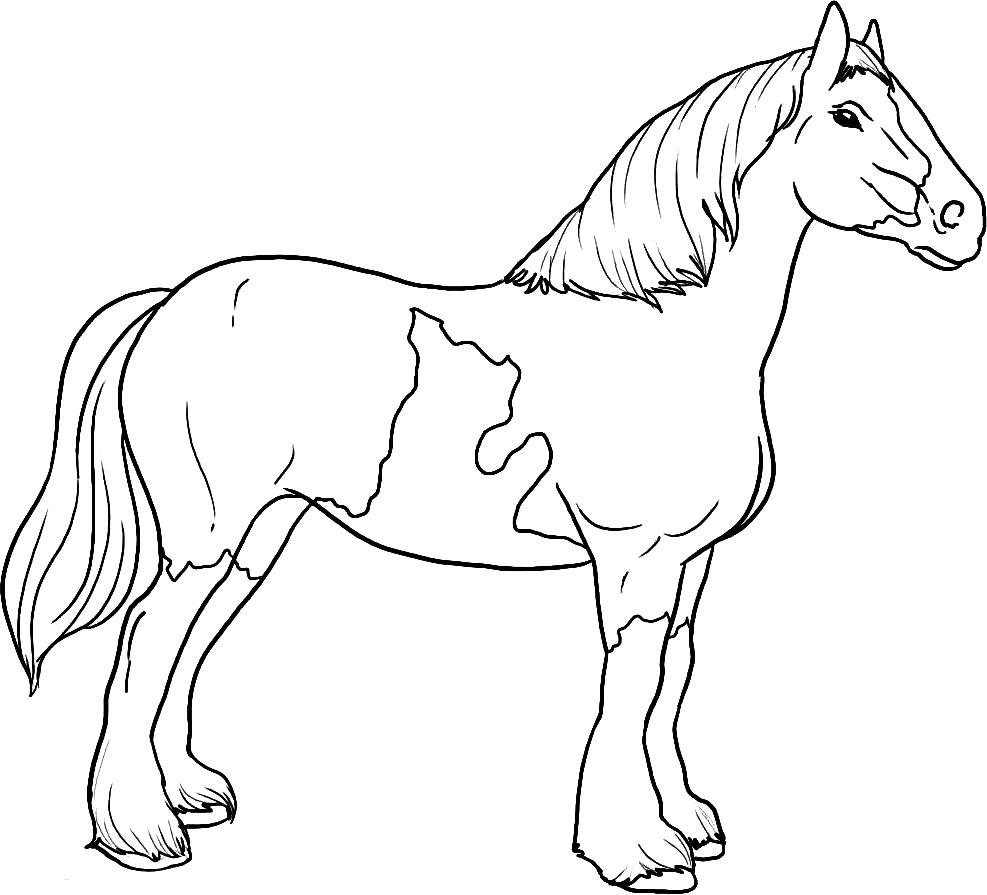 Imprimir imágenes dibujos para colorear – caballo, para niños y niñas