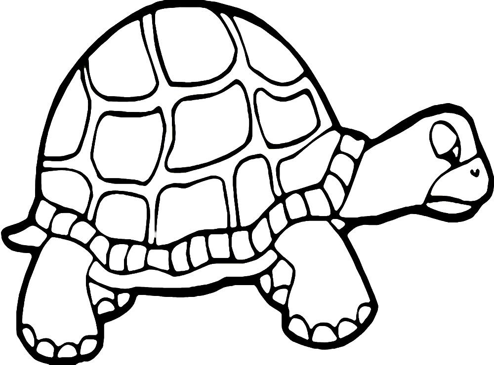 Vida marina – dibujos infantiles para colorear, para niños y niñas