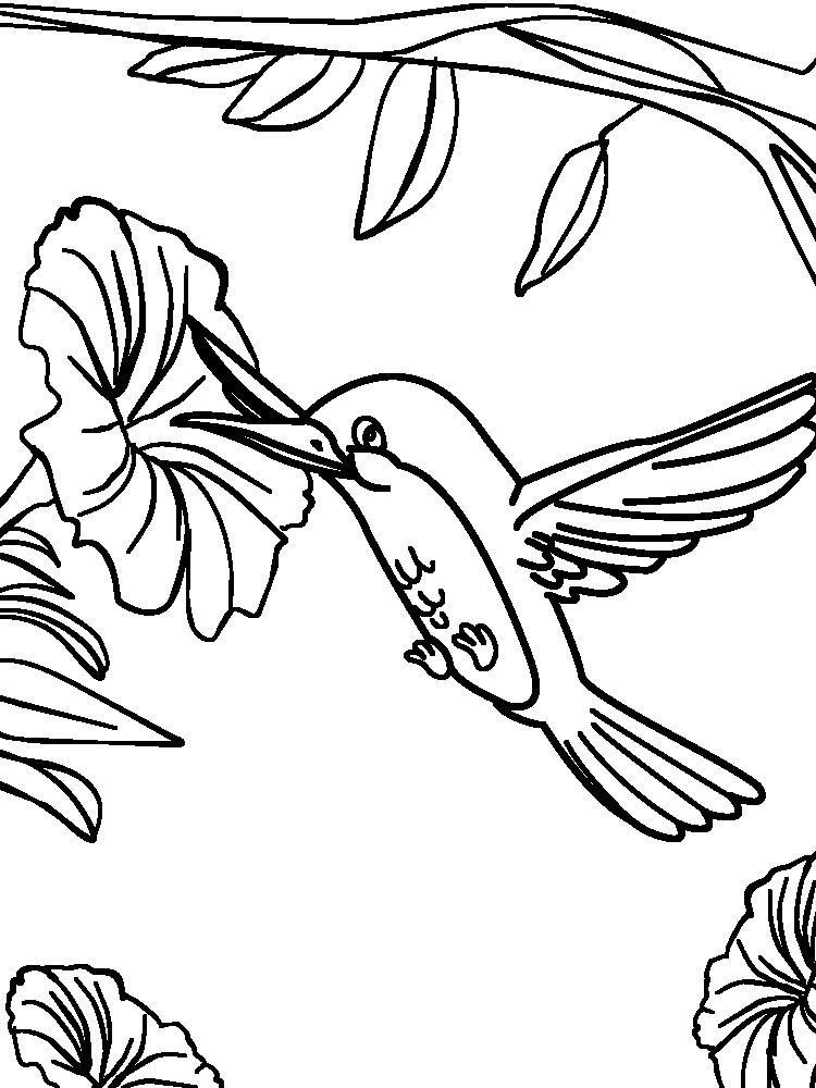 Descargue e imprima gratis dibujos para colorear – aves