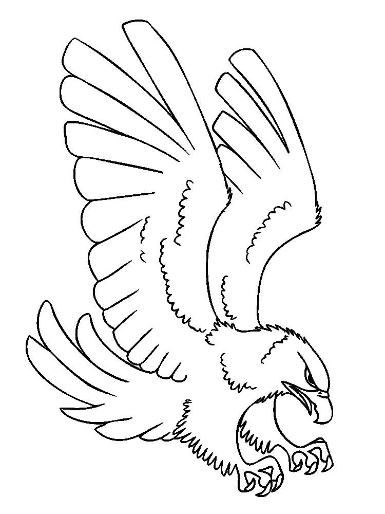 Descargar dibujos para colorear - aves.