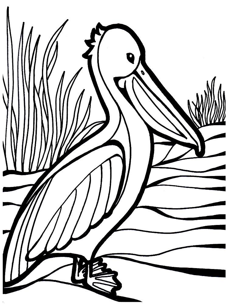 Imprimir Dibujos Para Colorear Aves Para Niños Y Niñas