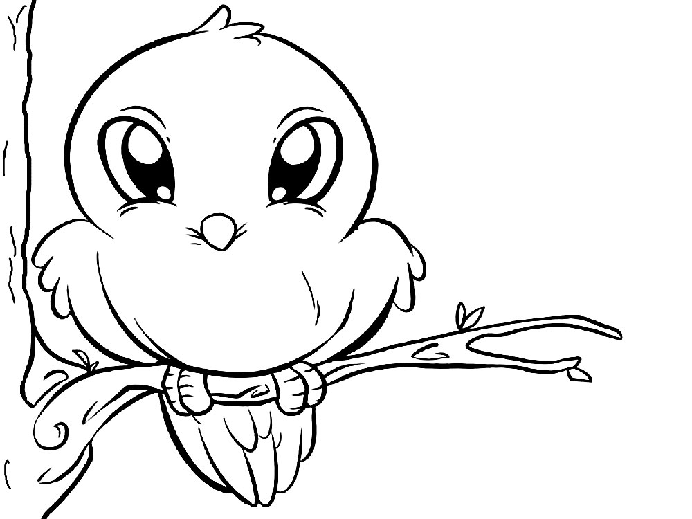 Dibujos para colorear – aves, imprimir gratis