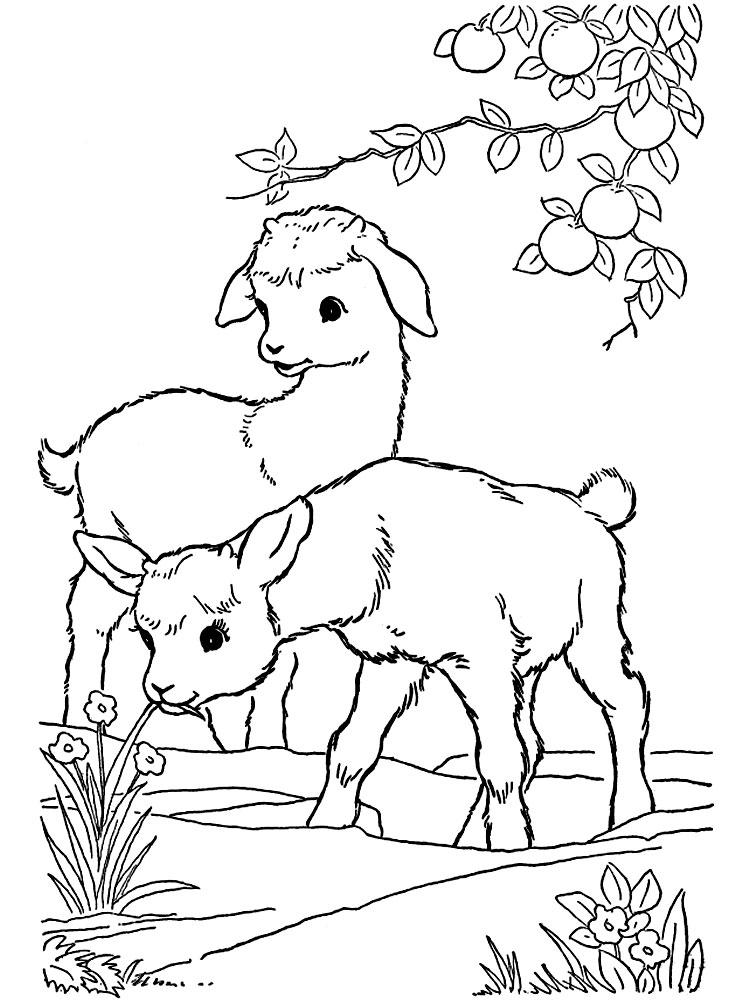 Dibujos para colorear – granja, para desarrollar la generación menor.