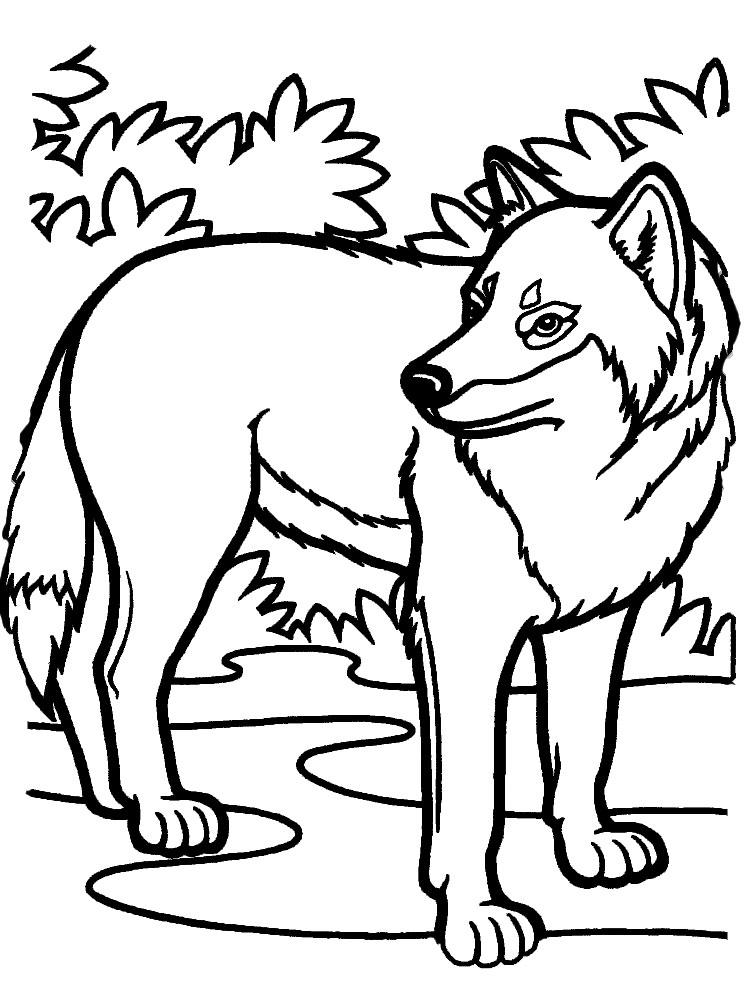 Descargamos dibujos para colorear lobos
