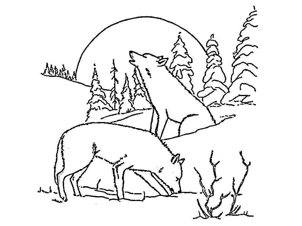 Lobos  dibujos para colorear e imgenes