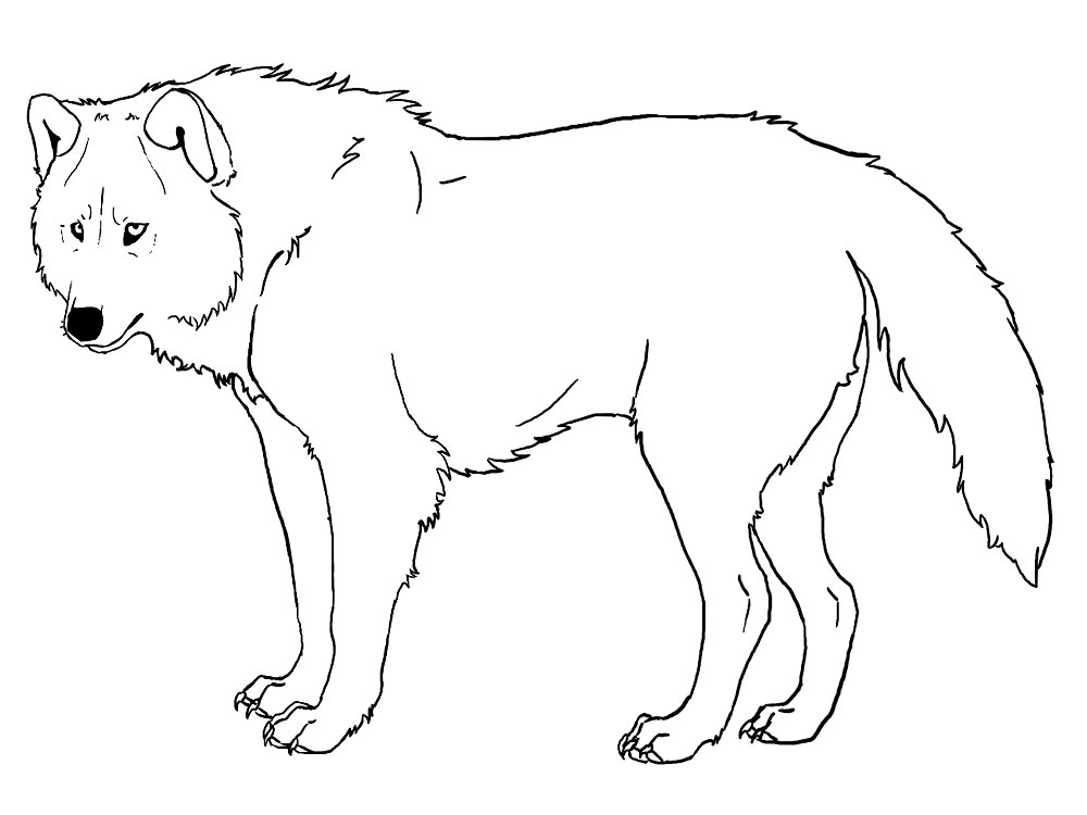 Lobos – descargar gratis dibujos para colorear.