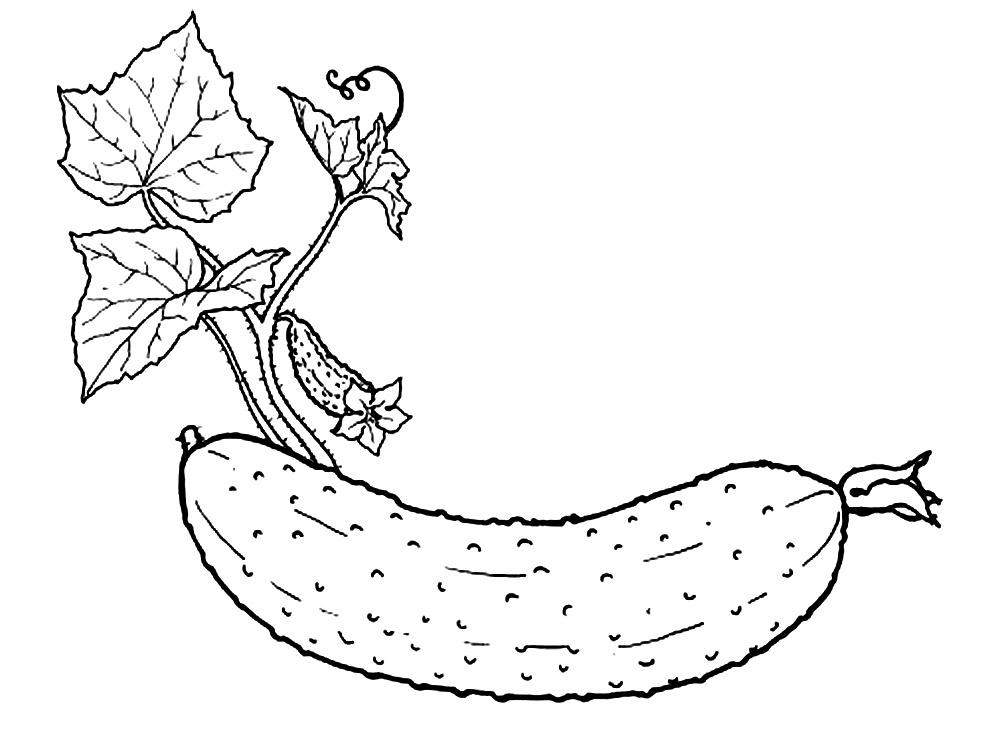 Dibujos Para Colorear Verduras Y Frutas