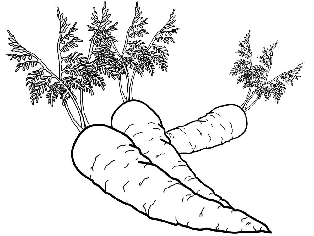 Images for frutas y verduras para colorear e imprimir - Plantillas para dibujar en la pared ...