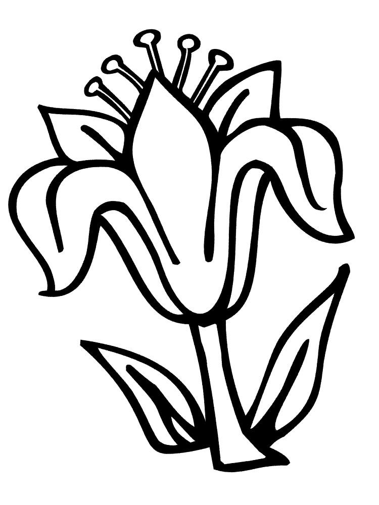 Dibujos para colorear flores para ni as y ni os for Plantas ornamentales para colorear